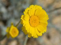 Çöl Bitkileri - 9