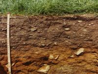 Kahverengi Orman Toprakları - 1