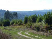 Karışık Orman - 2