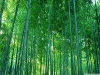 Muson Ormanı - 3
