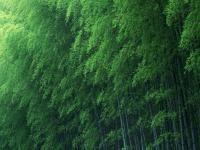 Muson Ormanı - 4