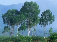 Muson Ormanı - 6