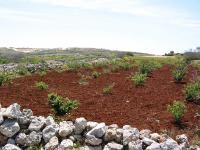 Terra Rossa Toprakları - 1