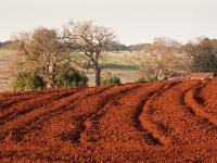 Terra Rossa Toprakları - 4