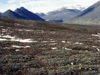 Tundra Toprakları - 1