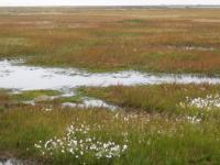Tundra Toprakları - 3