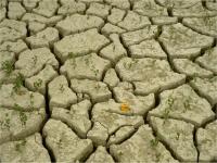 Toprak Tipleri