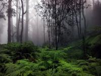 Yağmur Ormanı - 3