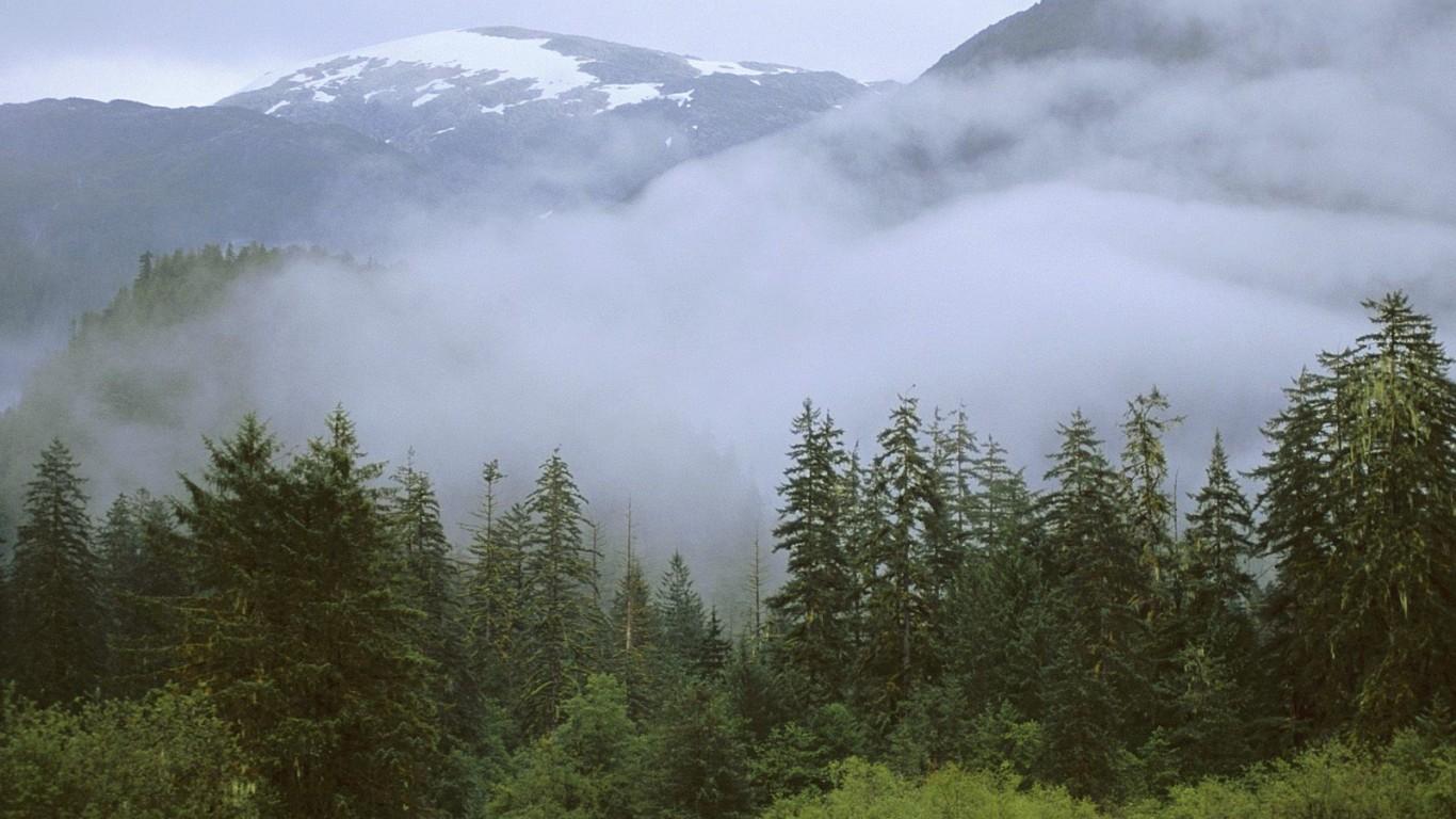 Karışık Orman - 1