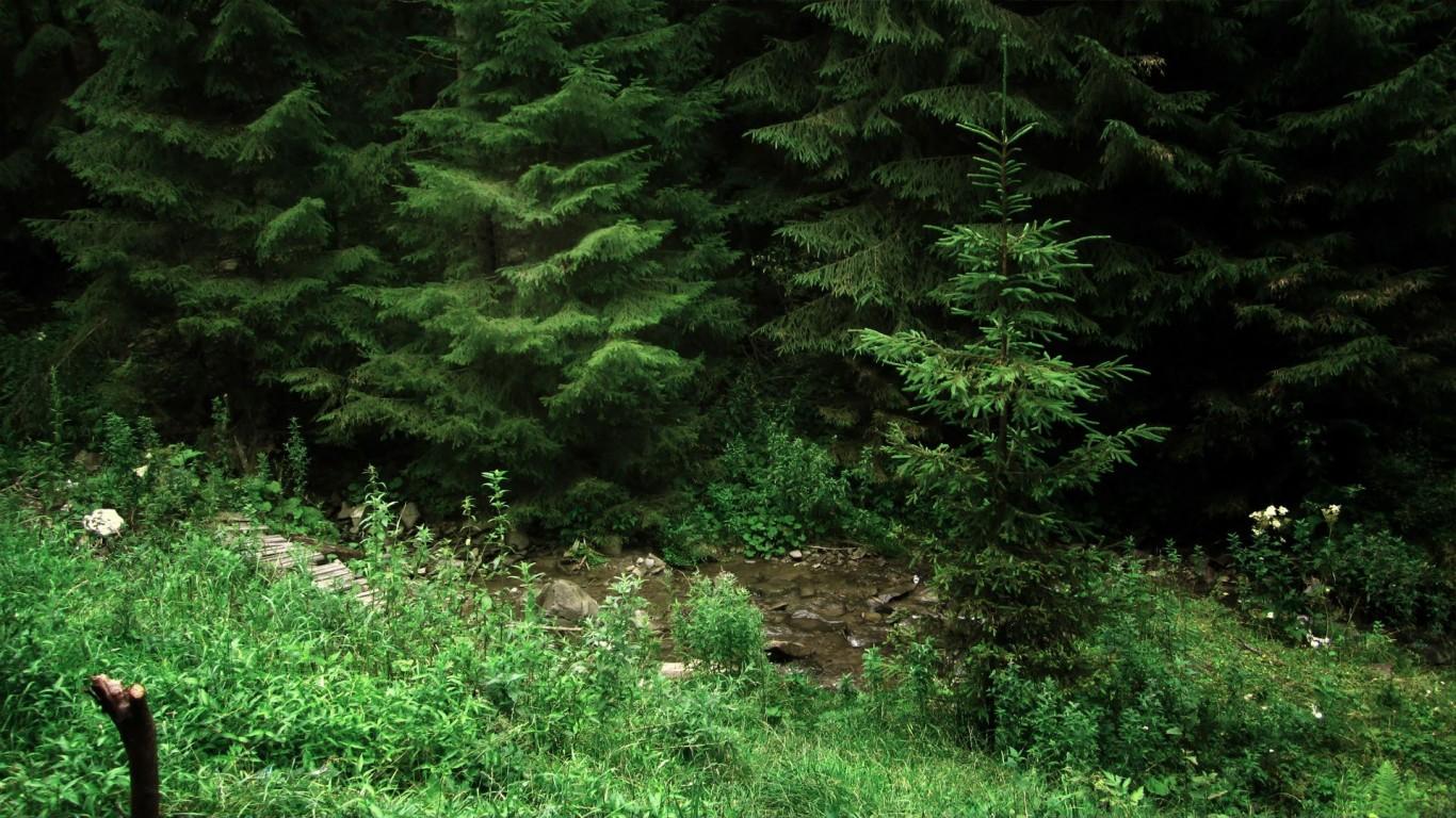 Karışık Orman - 4