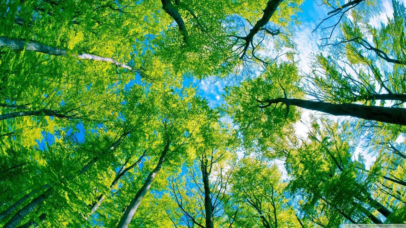 Muson Ormanı - 5
