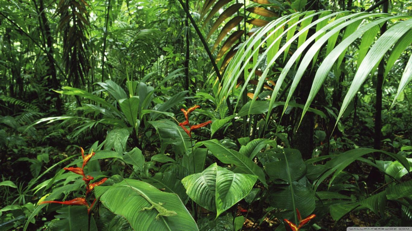 Yağmur Ormanı - 1