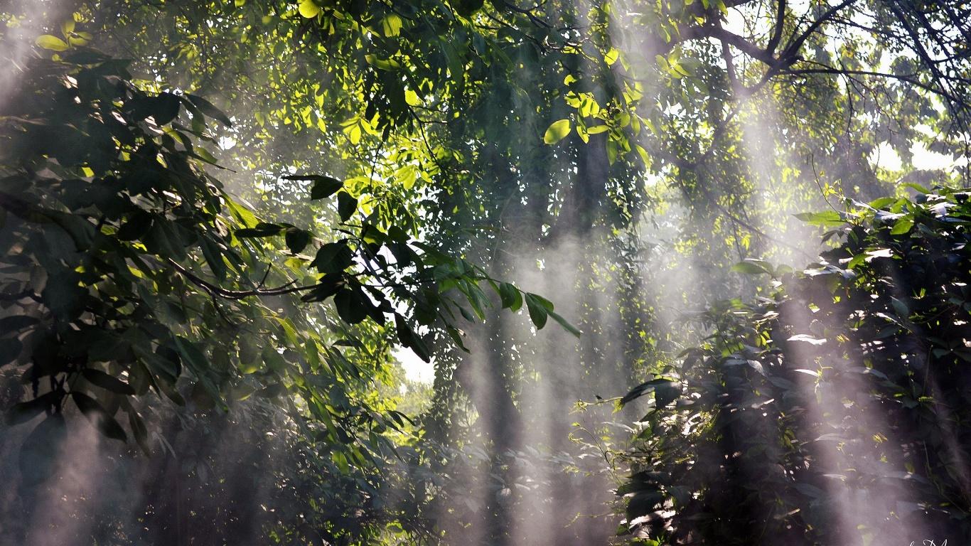 Yağmur Ormanı - 2