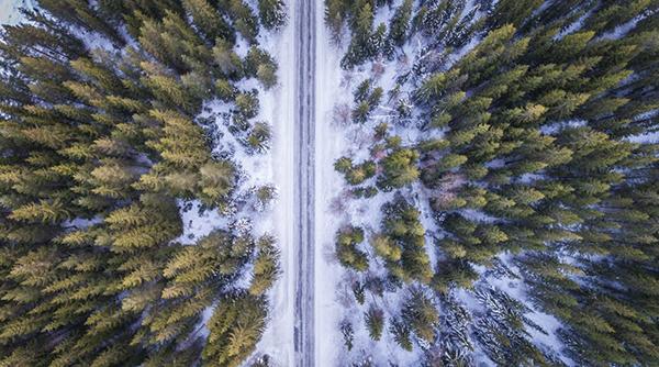 boreal ormanı