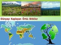 Dünyayı Kaplayan Örtü Bitkiler (Sunum)
