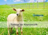 Türkiye'de Hayvancılık (Sunum)