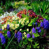 Dünyayı Saran Örtü: Bitkiler