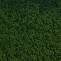 Tayga Ormanları