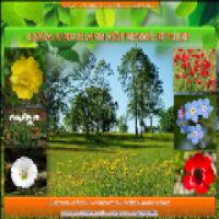 Türkiye'nin Bitki Varlığı Sunusu